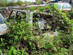 Graveyard (Alessio3373) Tags: abandoned graveyard rust neglected rusted scrapyard scrap abandonment ruggine rustycars unloved unused junkyards scrapped abandonedcars junkcars scrappedcar scrappedcars autoabbandonate