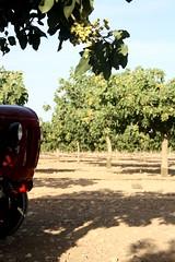 IMG_0384 (ACATCT) Tags: old españa tractor spain traktor agosto toledo antiguo massey pistacho tembleque barreiros 2015 bustards perdices liebres avutardas ff30ds r350s