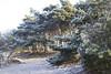 At the heart of winter (Martijn A) Tags: nature natuur trees bomen ice ijs frost vriezen frozen bevroren sand zand light licht sun zon cold koud winter canon d550 dslr 35mm lens rosmalen noordbrabant brabant the netherlands nederland 073 wwwgevoeligeplatennl