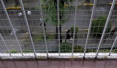 REJILLA - GRILLAGE (jpi-linfatiko) Tags: grillage rejilla baranda railing perspectiva perspective humedad frio cold humidity nikon d5200 sigma1770 picado cuadricula grilla grid