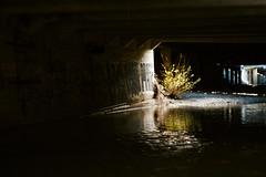 (Casey Lombardo) Tags: sananselmo sananselmoca marincounty kodak kodakfilm kodakgold kodakgold200 film filmphotography filmgrain filmscans colornegative colorfilm minoltasrt101 58mm bridge bridges dark grafitti underworld underground stream streams