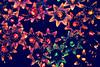 Looking For Satellites (eskayfoto) Tags: canon eos 700d t5i rebel canon700d canoneos700d rebelt5i canonrebelt5i christmas lights decorations christmaslights light bright dark sk201701066063editlr sk201701066063 lightroom bowie
