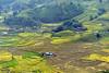 harvest 4 (bluefam) Tags: harvest hill mountain highland