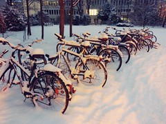 Snowed bikes in Munich (Gane) Tags: winter cycle wheel parked snowed tree bicycle snow