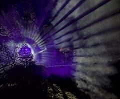 Westonbirt Enchantment IV (ye sons of art) Tags: christmas xmas trees lights illuminations gloucestershire england uk forestrycommission winter westonbirt