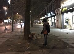 A1000, N20 (jovike) Tags: animal barnet dog espe london pavement retail shop tree whetstone woman