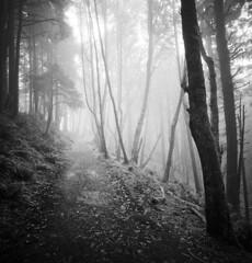 When a Lomo camera fails in the forest, do I care? (Zeb Andrews) Tags: lomography lomolca120 mediumformat film pacificnorthwest oregon forest hiking landscape blackwhite kodaktrix 6x6