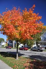 Beauty Before Age (cmu chem prof) Tags: mountpleasant isabellacounty michigan autumn fallcolor circularpolarizer mapletree mainstreet bluesky