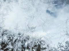 winter is here (jojoannabanana) Tags: 3662016 bokeh canonpowershot cold details dreamy frost frozen ice macro morning snowflakes snow s100 window winter