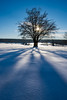 S H A D O W S (frank-heinen-photographer) Tags: schnee landscape winter ©wwwfrankheinenphotographerde frilufts germany eifel nrw snow draussen sun outdoor outdoorlife silhouette tree travel landschaft shadow sunbeam fujifilm xt1 reisen mood nature cold ice fujifilmxt1 xf1655mmf28rlmwr