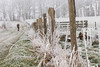 Walking in the countryside in winter (martine_vise) Tags: leperche france orne normandie winter winteriscoming winterday winterishere wintertime whitewinter beautifulwinter frosted glace gel ice outside fenced country contryside countrylife rurallife hiking walking