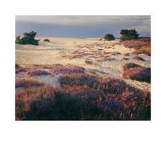 Hoge Veluwe Netherlands aug. 2016 (Bert Vliegen) Tags: nature netherlands natuur nederland veluwe kodakektachromee100vs 6x7 landscape chamonix45n2 nikkor90mm