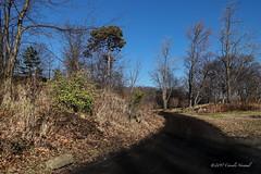 An Unknown Future ahead (CVerwaal) Tags: centralpark newyork ny usa sonyrx100iii