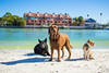 IMG_1897 (megscapturedtreasures) Tags: ammo sun sunset dog beach dogs ruff days daycare