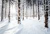 Licht im Wald sehen (Gruenewiese86) Tags: harz schnee wald winter wã¤lder winterlandschaft forest explore exploreharz natur nature snow light highkey canon tamron 1530 wälder