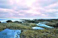 Point Lonsdale back beach (alexmowat) Tags: waves rockpools d5100 nikon seaweed long exposure