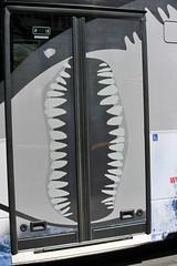 Junghaie präsentieren neu gestalteten Linienbus 150