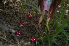Andando por el bosque