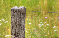 Wiese mit Zaun (Tom.T.Bone) Tags: wood canon fence eos weed dof bokeh natur lawn meadow wiese gras stm grassland zaun holz stacheldraht holzpfahl 2xp f3556 18135 3556 apsc 18135mm grnland 700d