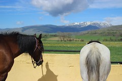 Sweet Ass (maikrofunky) Tags: horses horse cloud mountain snow nature familia 35mm canon caballo caballos nieve bluesky natura girona nubes montaña mothersday gerona oneshot hípica llivia cieloazul díadelamadre notreatment 600d