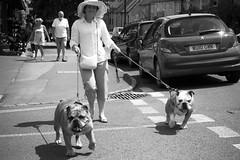 Sunday Walk. (Cathy G) Tags: summer england bw english canon walk sunday cotswolds bulldog bulldogs dogwalk stowonthewold canon7d