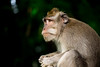 (suanhin) Tags: bali outdoor nature monkey forest depthoffield bokeh