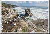 Muriwai beach (doctorangel) Tags: new zealand nueva zelanda muriwai muriway beach playa gannet gannets ganets alcatraz doctor angel doctorangel auckland australian australiano morus serrator
