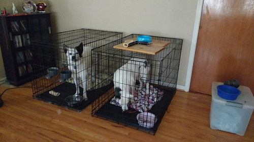 Blue New Kennel