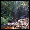 Little waterfall in forest stream (Indianature st2i) Tags: valparai tamilnadu tea teaestate indianature india indiragandhiwildlifesanctuary westernghats anamalaitigerreserve anamalais anamallais anaimallais anamalaiwildlifesanctuary 2016 2017