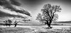 Isolation on a Winters day (simonvaux1) Tags: cold winter snow sun bright crisp bleak lonely isolated trees dramatic sky clouds black white mono nikon d800 fx full frame 2470 28 simon vaux photography