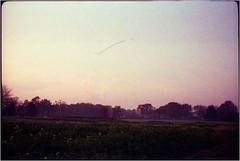 gute Reise (Ulla M.) Tags: agfasilettei vintage analog canoscan8800f expiredfilm kleinbild vögel zugvögel 35mm freihand umphotoart