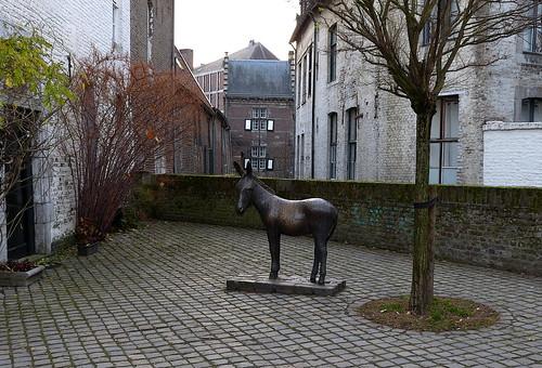 Donkey in Maastricht