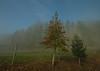 My Christmas Tree (e27182818284) Tags: sigma1020mmf35exdchsm schwarzwald blackforest