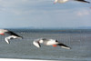 DSC_6821.jpg (kTomoyuki) Tags: 鷗 鴎 seagull カモメ かもめ 熊本市 熊本県 日本 jp