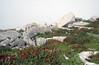 Himalayan bistort (Persicaria affinis), Rohtang Pass (Niall Corbet) Tags: india himachalpradesh himalaya himalayas manali ley ladakh rohtang rohtangla rohtangpass bistort himalayanbistort persicariaaffinis