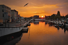 Setting the sunset (Vitor S. Cruz) Tags: riadeaveiro canalcentral pontepraça gaivota ave sunset dusk sky water orange me you moliceiro boat town buildings 遙遠而美麗