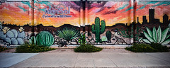 Maricopa County from desert to skyline (Dennis Valente) Tags: 5dsr desert contemporaryurbanart 2016 streetart sw spraypaint southwestern rooseveltrowartsdistrict hdr valleyofthesun urbanart southwest angeldiaz paint art isobracketing phoenix cactus arizona wallart marisolfederalcreditunion mural rooseveltrow