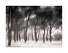 pinar nevado (Ramón Medina) Tags: valladolid castilla pinos pinar pines nieve snow árboles trees icm intentionalcameramovement impresionista impressionistic painterly blur invierno winter