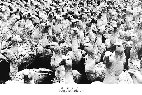 10-Carte postale // 10x15cm // Les festivals