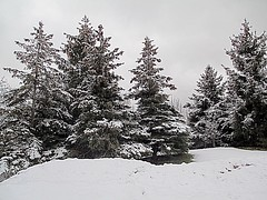 On Colder Days (Haytham M.) Tags: sky cover fresh hill evergreen landscape beauty clear white cold ontario canada winter snow