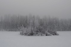 Frost Island (steve_scordino) Tags: frost ice universitylake anchorage alaska winter white fog icefog nikon d7000
