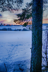 Winter fields (Joni Mansikka) Tags: winter nature snowy fields pine trees buildings outdoor landscape colours sunset sky paimio suomi finland sel16f28