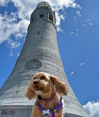Feeling Tall (yourdesignerdog) Tags: ifttt wordpress all posts photo challenge wordless wednesday 2017ppc petphotographychallenge bed blog cute dog smiling low angle monument mount greylock perspective pet photography berkshires