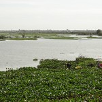 Harvesting Water Plants thumbnail