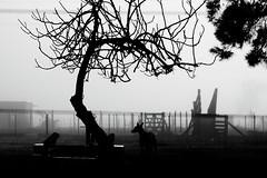 (Walter Daniel Fuhrmann) Tags: niebla fog blancoynegro blackandwhite rural dark perro dog arbol tree campo abandonado abandoned
