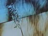 seeking support (Marjatta Caján) Tags: autumn feelings blue melancholy