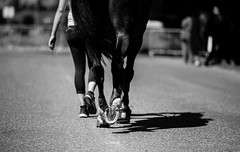 Concours Conthey   Switzerland   13.06.2015 (#vmivelaz) Tags: horse sport canon cheval schweiz switzerland jumping europe suisse vinz contest 5d concours saut equine valais lightroom equitation conthey canoneos5dmarkiii vincentmivelaz vmivelaz