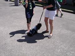 Fremont Solstice fair  DOG PARADE.    113 (Hmm.....) Tags: cola seattlewa dogparade fremontsolsticefair citizensforoffleaseareas