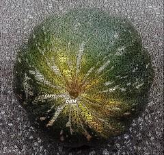 Carpe Diem (YAZMDG (16,000 images)) Tags: word pumpkin text carpediem wordfoto