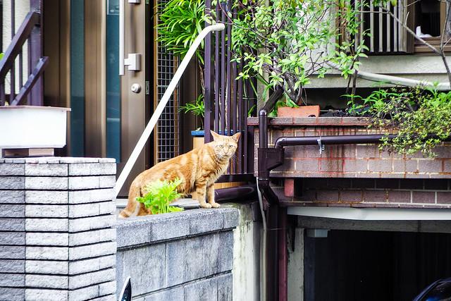 Today's Cat@2015-06-25